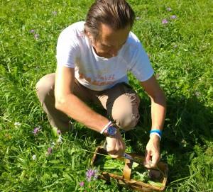 Wildkräuter sammeln für grüne Smoothies