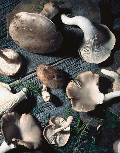 Stöckli Dörrex Dörrautomat Dörrgerät ideal auch für Pilzsammler